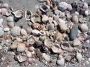 Shells, shells, shells...She sells sea shells by the seashore...this is one of the first beaches we