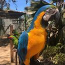 A fun and colorful but NOISY visit to the Macaw sanctuary. Heidi used to want one of these as a pet...what was she thinking?!