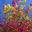 Bursts of colorful spring flowers are everywhere in Puerto Vallarta.
