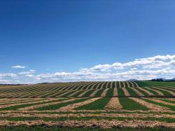 Plowed farm fields create an interesting geometric design in southeast Idaho.