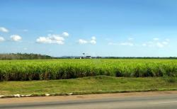 From Havana to Cienfuegos, sugarcane fields are common... running alongside 4-lane highways with virtually no vehicles... maybe an occasional horse cart, or motorcycle, a car now and then, or a tractor, it was one of the most empty highways we