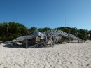 They have a sperm whale skeleton on the beach.