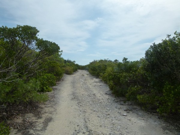 We walked the island over this old road.
