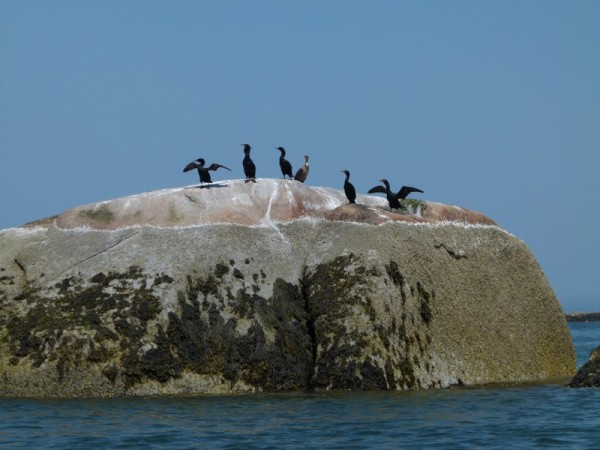 There is a lot of wildlife to see too. Cormorants on a rock.