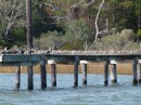 We often see docks completely full of birds. Those are all birds to the right too!