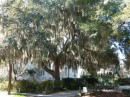 We spent a day in Beaufort and walked around the town.  The trees were beautiful there.