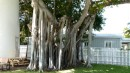 This Banyan tree was next to it. For all you OLD network administrators...now I know why they called the network Banyan Vines.
