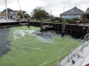 There was duckweed in Elizabeth City, NC also where we spent a couple of nights at the free city docks.