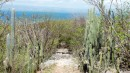 The trail was bordered by huge cactus on each side.  We had a great hike around the island.