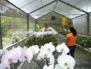 Orchid farm in El Valle