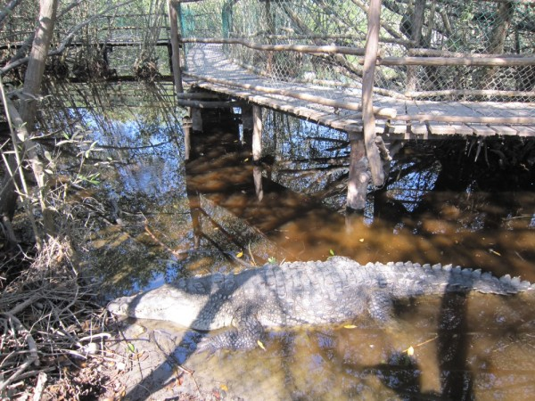Crock reserve