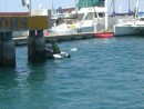 La Paz, Bay Fest activities:  the blindfolded dingy race