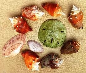 Wash Shells