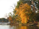 Fall colors on the Wye River (Dividing Creek)