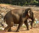 LEGACY?: This old gal has spent most of her life in and around the Trincomalee dump. Not all wild animals live in beautiful, protected, national parks...