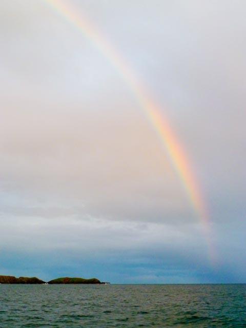 Dale Rainbow