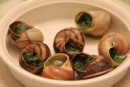 Snails, a family favourite