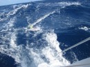 Action packed, bringing the fish in while sailing at 10 knots!