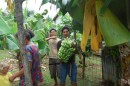 Hapai 0440001: Local family cut down some bananas to give