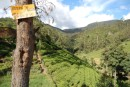 view from mountains, tea plantations