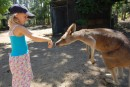 Kara gets close with the kangaroos, animal farm Batemans Bay