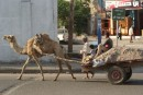 Getting around, Aden style