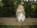 The cheeky monkeys are not shy and will grab the bananas from you and can get quite fiesty if you deny them.