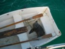 sea lion in the dinghy