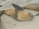 happy sea lion