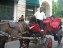 Horse and cart Cartagena