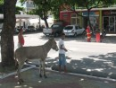Boy and donkey in Cabedelo