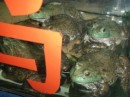 frogs before cooking