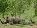 mum and baby rhino mudbath