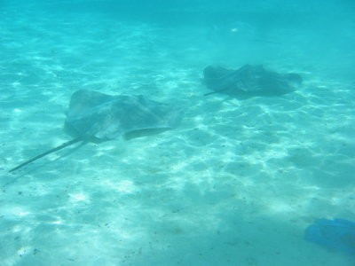 We swam with rays again in Bora Bora, but they weren