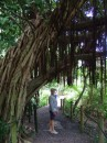 Banyan tree?