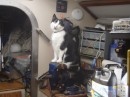 The workshop supervisor