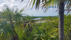 Shroud Cay: View of route through mangroves from Camp Driftwood